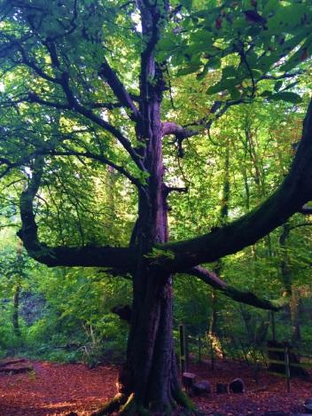 natalia tree 2