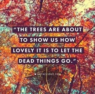 tree kelly